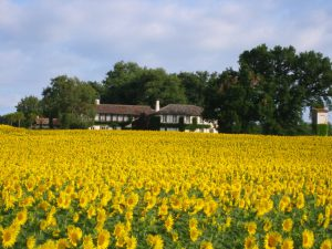 How to find a beautiful property for sale in France - sunflower field